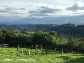 Cotopaxi - La Hacienda la Campina